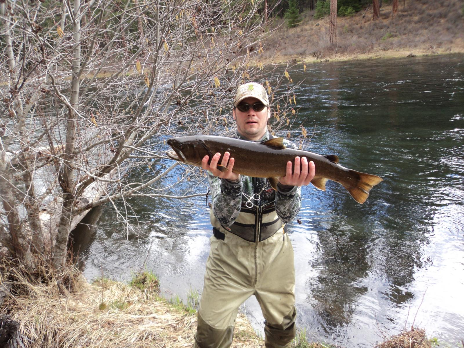 Bull trout members gallery maine fly fish for Trout fishing oregon
