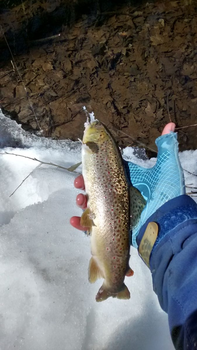Opening Day Brown
