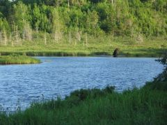 BearBrook and BloodPond 061815