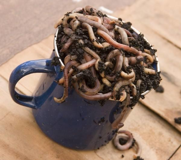 Cup of Worms.jpg