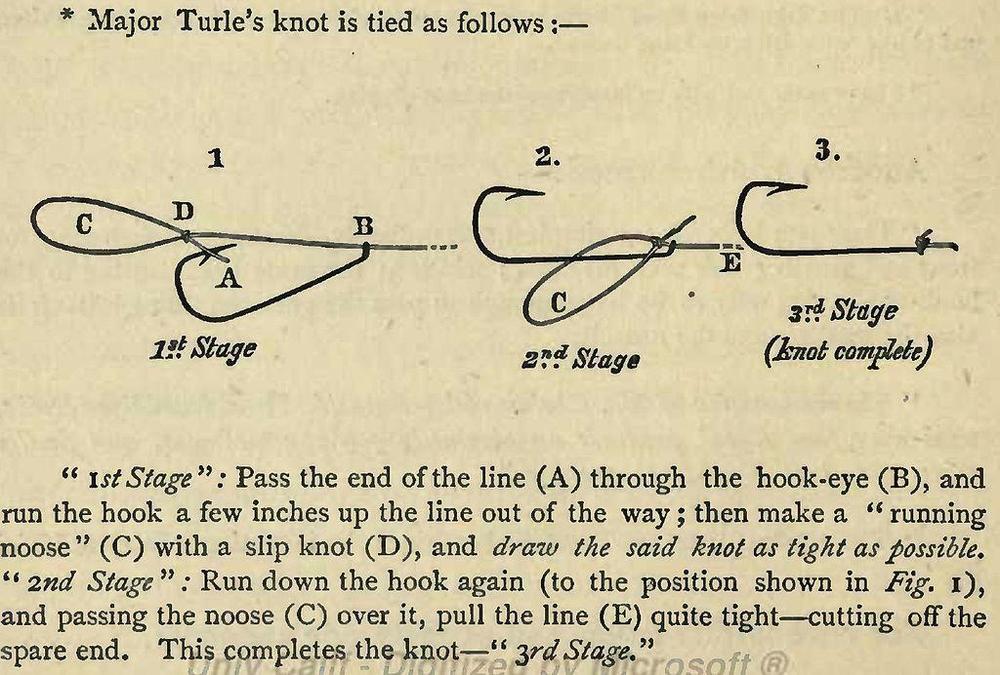 Turle knot..JPG